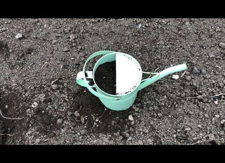 I added some dirt into the watering can with a garden shovel. Optional - I use gardening gloves to protect my hands.