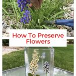 How do you preserve flowers? I love the flowers that grow in our yard. I pressed them and preserved them on an old vase so I could enjoy them year around.