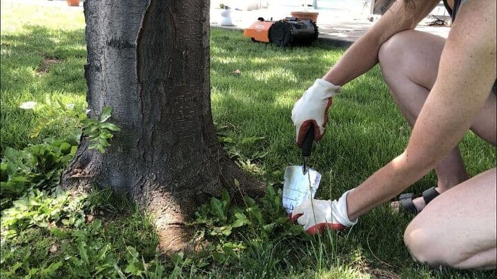 You can remove weeks by digging them up. Pulling the root system totally out of the ground will prevent them from growing and spreading.