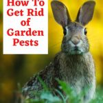 It's springtime here and I'm busy getting my garden and apple tree ready. I get those pesky rabbits, squirrels, voles, aphids, and more in mine during gardening season - how about you? I thought I would share a few tips on things I use to keep those pests out of my garden.