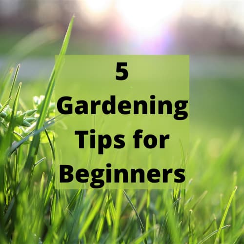 Do you want gardening tips for beginners? A garden is a perfect place for you to relax. You can grow colorful flowers and enjoy their fragrance on the wind. Or you can make a grassy field, perfect for playing with the kids. However, a garden can often take a lot of maintenance. There are a few ways that you'll be able to make your gardening routine more effective, saving you time and effort.