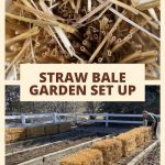 Have you heard of gardening with straw bales? I'll share with you why I'm trying it, and how to set it up in your garden.