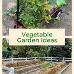 Do you want some vegetable garden ideas? I'm planting vegetables in straw bales, and in a garden bed, and I'm sharing my process with you.