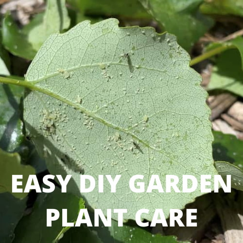 Do you want easy DIY plant care? Here are some tips on what I do for easy do-it-yourself garden plant care.