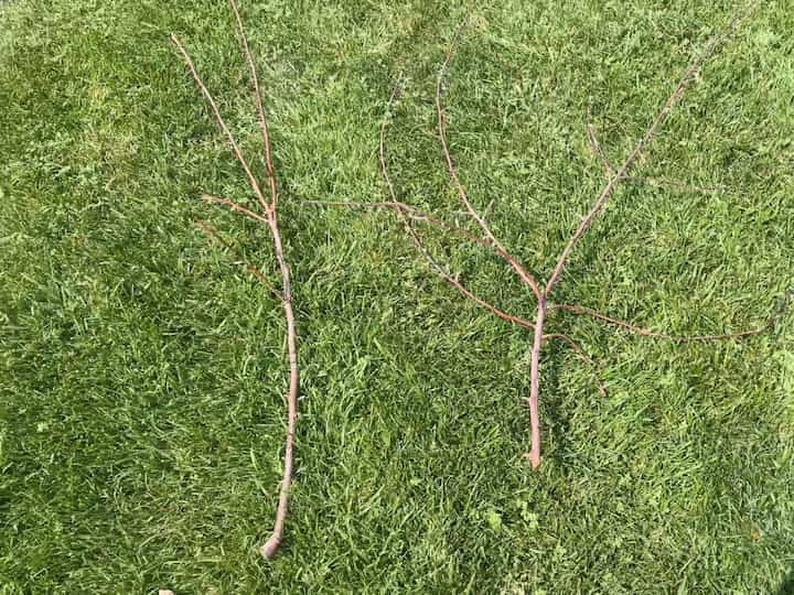 We had a storm this summer and some of the branches from our trees had fallen to the ground. I picked out one branch and thought it needed a little more to look like a tree so I found a second tree branch. You could easily just use one, or put many together to get the look you want. If you don't have branches available you could look for a faux tree at a thrift store, or you could make your own tree branch form.