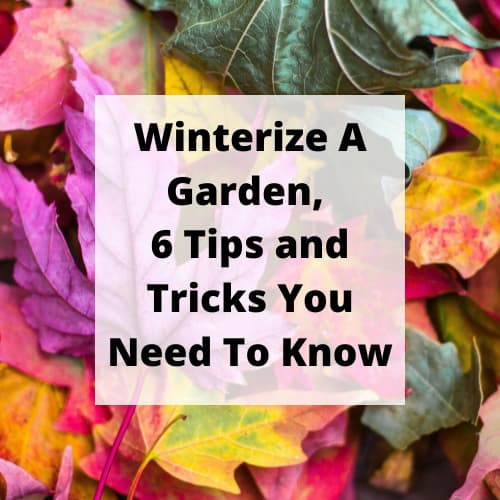 Do you know how to winterize a garden? I have 5 tips you need to know to help you prepare for winter, and get ready for spring.